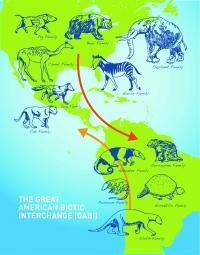 Great American Biological Interchange