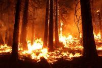 California Rim Fire