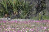 Biodiverse Jurien Dune Vegetation