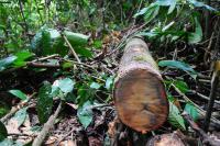 Dead Wood in Borneo