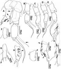Diaptomid Species