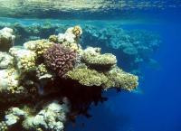 Tara Oceans Expedition Yields Treasure Trove of Plankton Data (16 of 19)