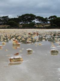Shallow Acid Saline Water in Gneiss Lake, near Grass Patch in Western Australia