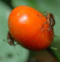 2 Hemipteran Bugs