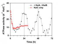KaiC ATPase Activity-Time Profile