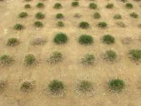 Turfgrass Research Field