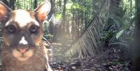 Puma Recorded by a Camera Trap