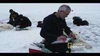 Polar Bear Tracking