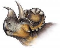 <em>Wendiceratops pinhornensis</em>