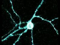 Neuron Ike Neon
