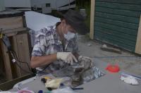 Sampling Permafrost Bison Bone