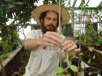 Tracing Tahitian Vanilla