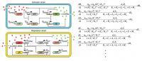 Design of Biological Circuit