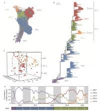 Evolution of Human Influenza A Virus