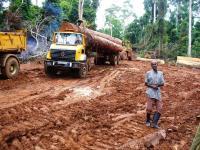 Legal Logging