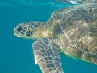 World's Turtles Face Plastics Deluge Danger (2 of 2)