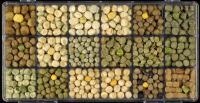 Pea Genetic Diversity