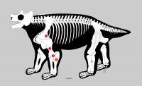 Ancient Anatomy