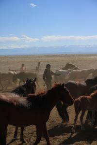 Mongolian Horses in Mongolia