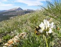 Queen Bumble Bee (1 of 3)