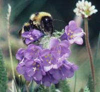Queen Bumble Bee (2 of 3)