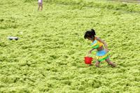 Green Algae in China