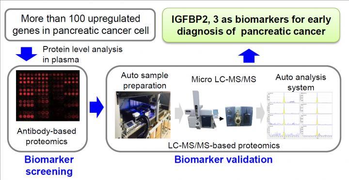 pancreatic cancer biomarker)