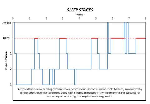 Researchers Id First 2 Genes Regulating Sleep In Mice Using Genetic Screening Eurekalert Science News