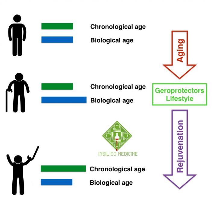Image result for aging biomarker