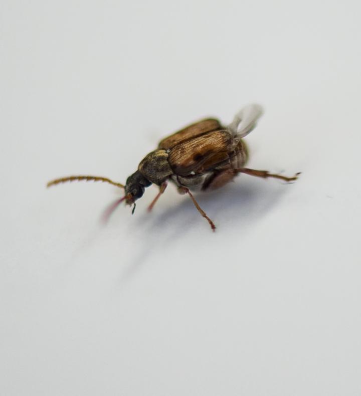 beetle lab