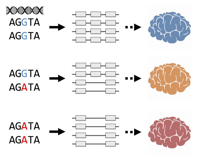 RNA-klyvning