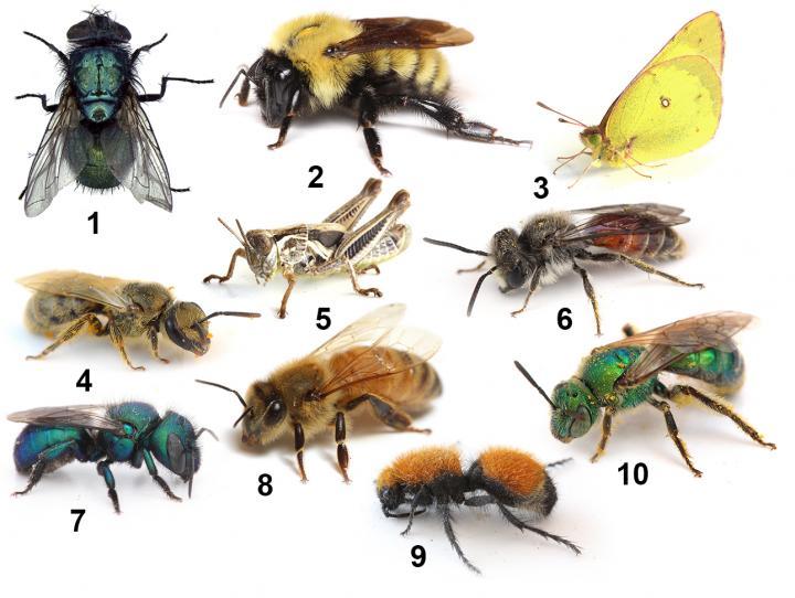 Bee Informed Public Interest Exceeds Understanding In