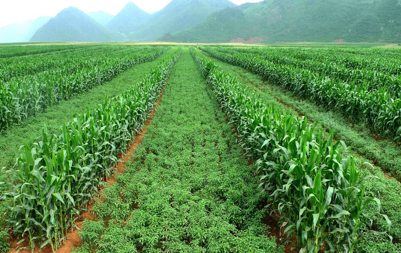 How to Prevent Soil Erosion