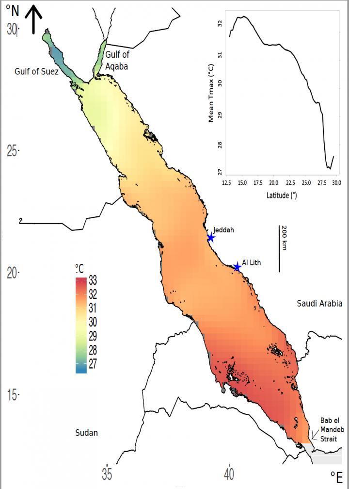 As temperaturas máximas e médias aumentam gradualmente do norte do Mar Vermelho até o sul. CRÉDITO: Reproduzido com permissão da referência 1 © 2017 Nature Publishing Group