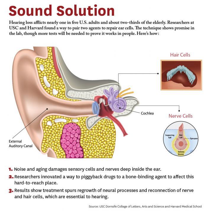 new study shows hope for hearing loss   eurekalert ...  #15