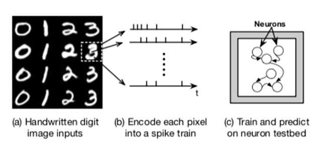 Growing Computers In Petri Dishes Eurekalert Science News