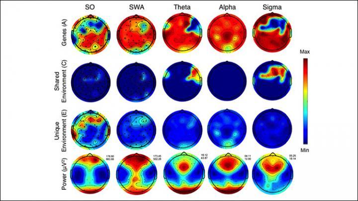 How nature, nurture shape the sleeping brain