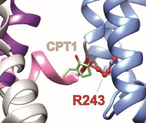 UCI Researchers Discover Molecular Mechanisms of an African Folk Medicine