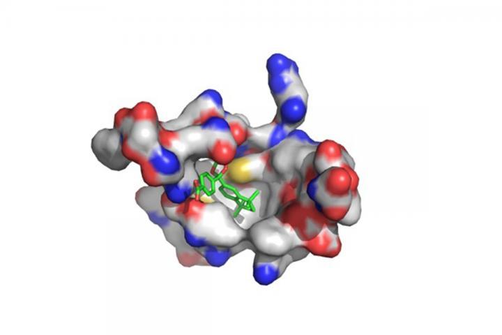 New drug seeks receptors in sarcoma cells, attacks tumors in animal trials