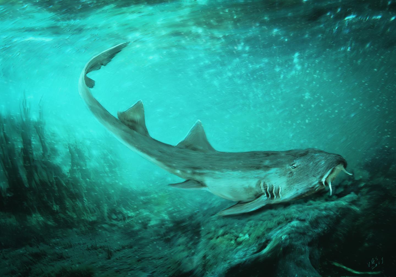 Galagadon haai