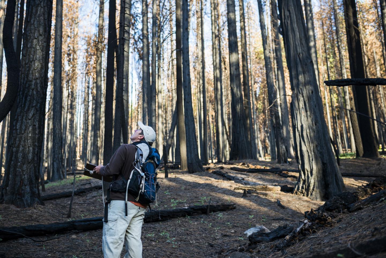 Point Blue scientist recording data in a Sierra forest.