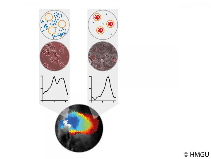 마크로파아지 활성에 따라 다른 신호를 만들어내는 bacteriochlorophyll a