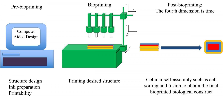 Using physics to print living tissue | EurekAlert! Science News