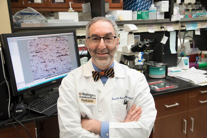 Immune Cells Determine How Fast Certain Tumors Grow