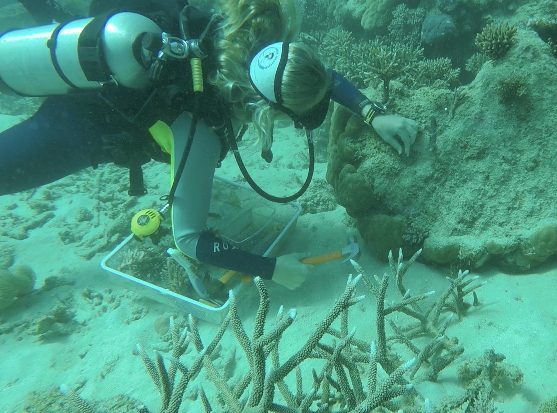 Safeguarding Australia's Great Barrier Reef takes a cultural shift | EurekAlert! Science News