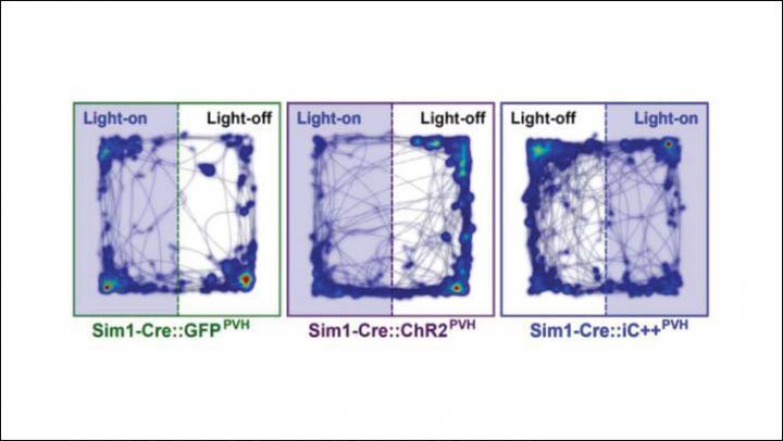 Hypothalamus pathway drives defense behaviors | EurekAlert! Science News