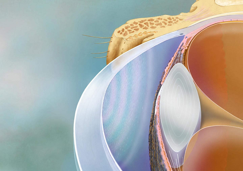Testing corneal cell quality? Apply physics | EurekAlert! Science News