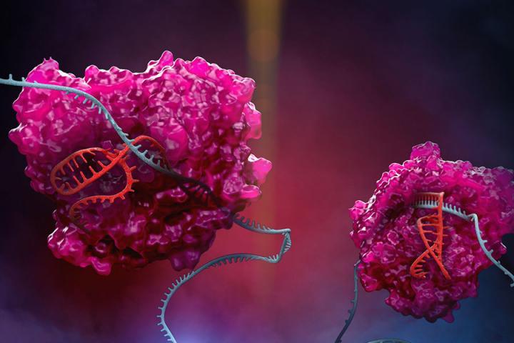 New CRISPR Platform Expands RNA Editing Capabilities