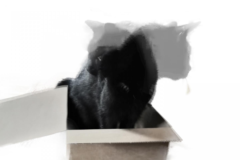 Schrödinger's cat with 20 qubits | EurekAlert! Science News
