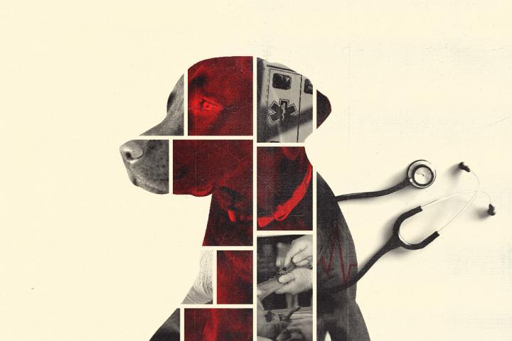 Dog Down: Effort Helps Emergency Medical Staff Treat Law Enforcement K-9s